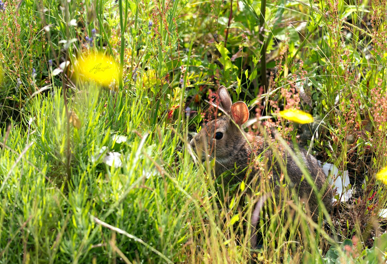 Making wilder spaces means habitat!