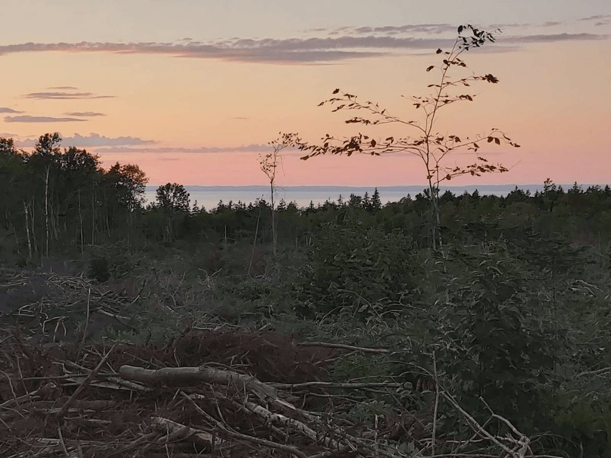 8 acres of land. Looking for a renter, long term or short. Space to park an RV, tiny home or van. Outhouse, rainwater systems. Offgrid. Permaculture practices started. Opportunity to start your own little offgrid living space.