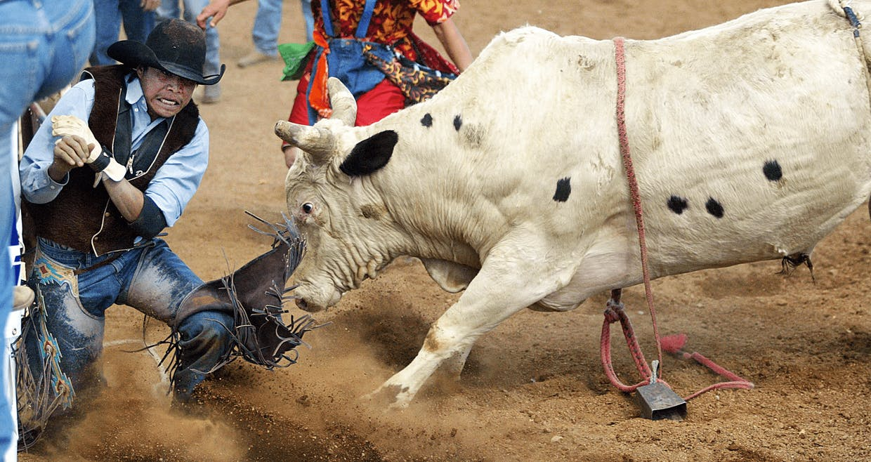 Cochise College's Daniel Etsitty gets face to face with a two thousand pound bull after his dismount during Saturday's installment of the Cochise County Rodeo at the Sierra Vista Riding Club arena. (2005)