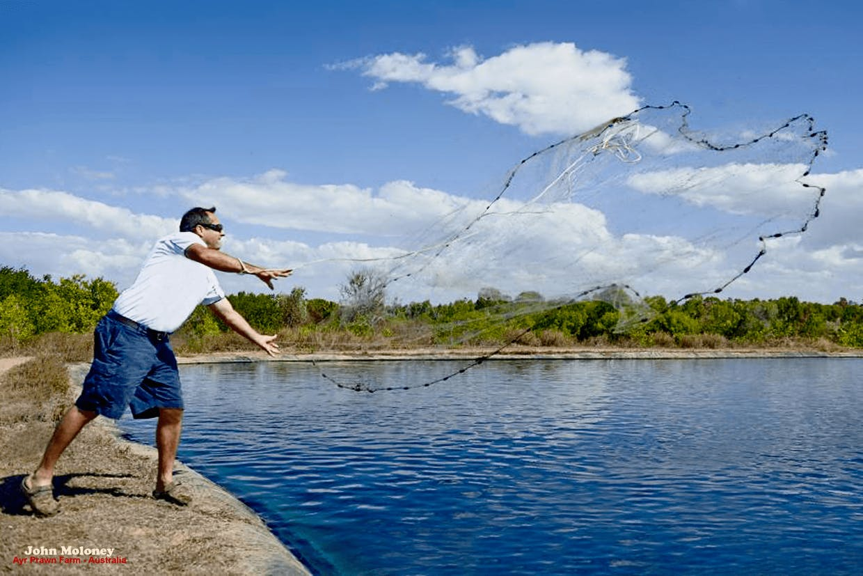 John Moloney throwing a cast net into his prawn pond in Australia for the photoshoot