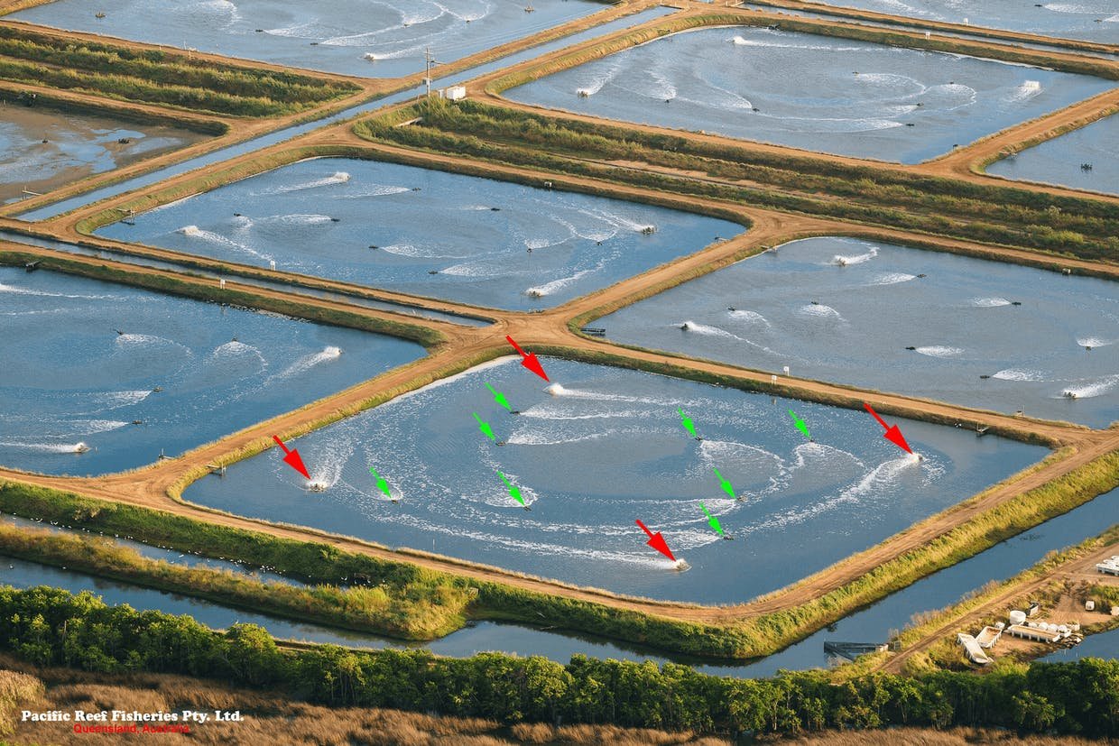 Pond aeration and circulation at Pacific Reef Fisheries Pty. Ltd