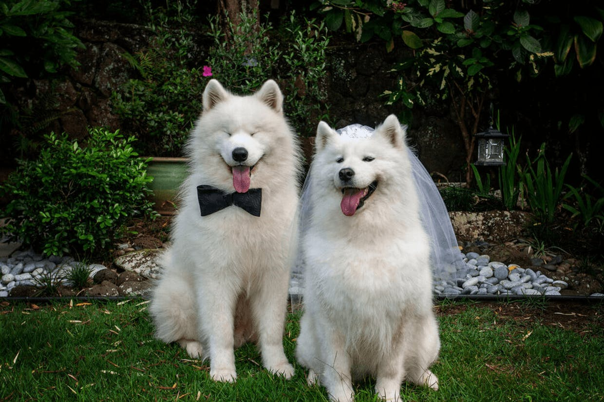 Our furry family LOVE to participate in our special occasions!