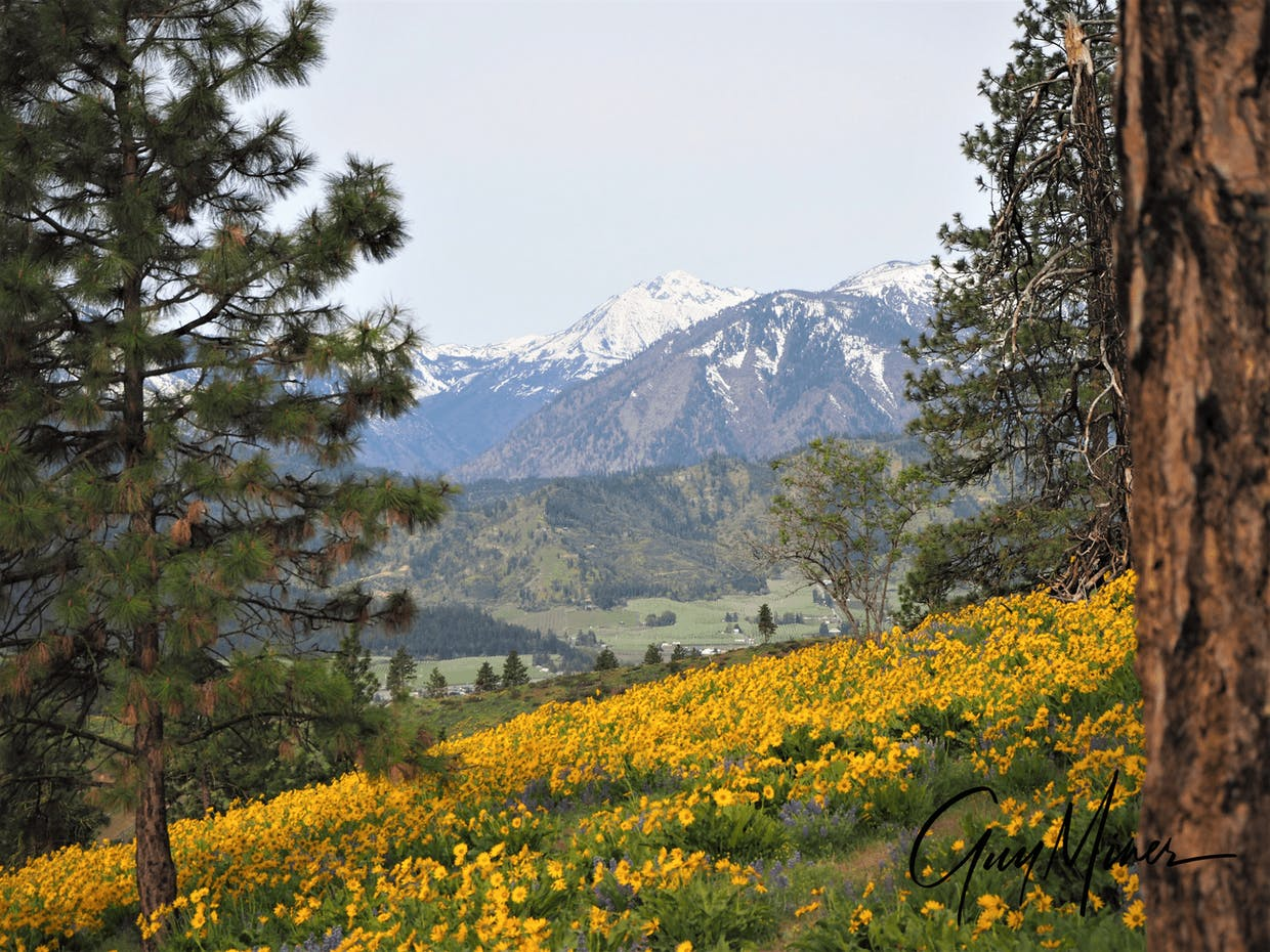 Our foothills in spring.