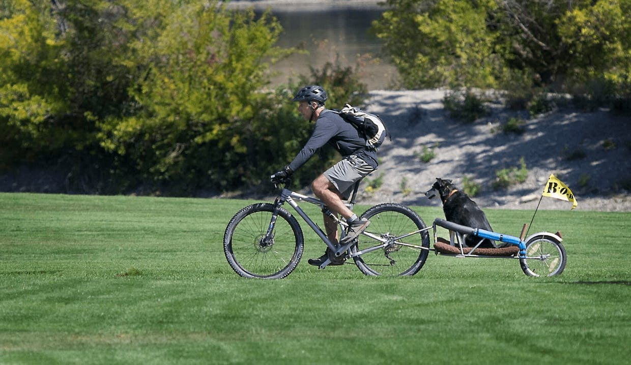A dog gets a ride on a trailer of a bicycle on the Apple Capital Recreation Loop Trail on Wednesday through Riverfront Park.
