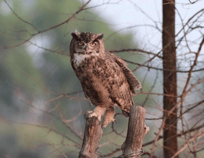 "Feeling ""owl"" - live"