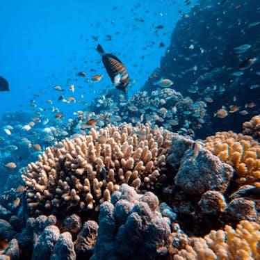 Ocean-based Solutions