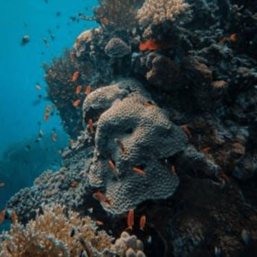 Ocean-based