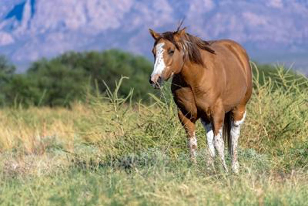 A horse grazes on protected land near Amado. Photo from Arizona Land and Water Trust