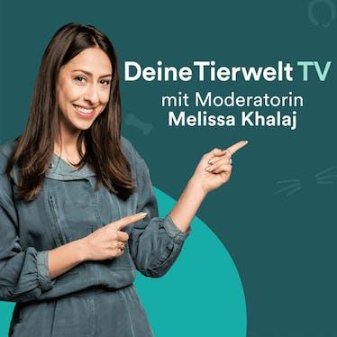 DTW-TV
