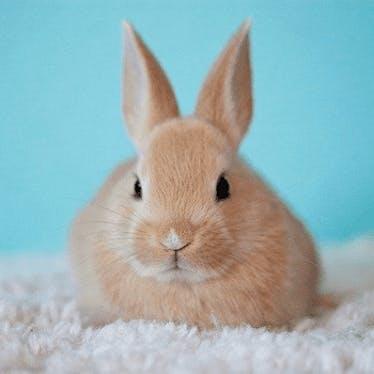 Kaninchen-Liebhaber