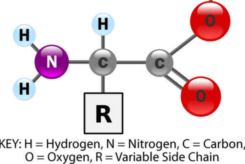 Amino acids and peptide links