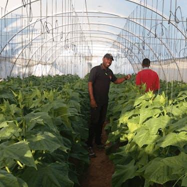 Greenhouses Zimbabwe