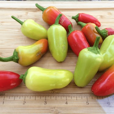 Pepper Identification