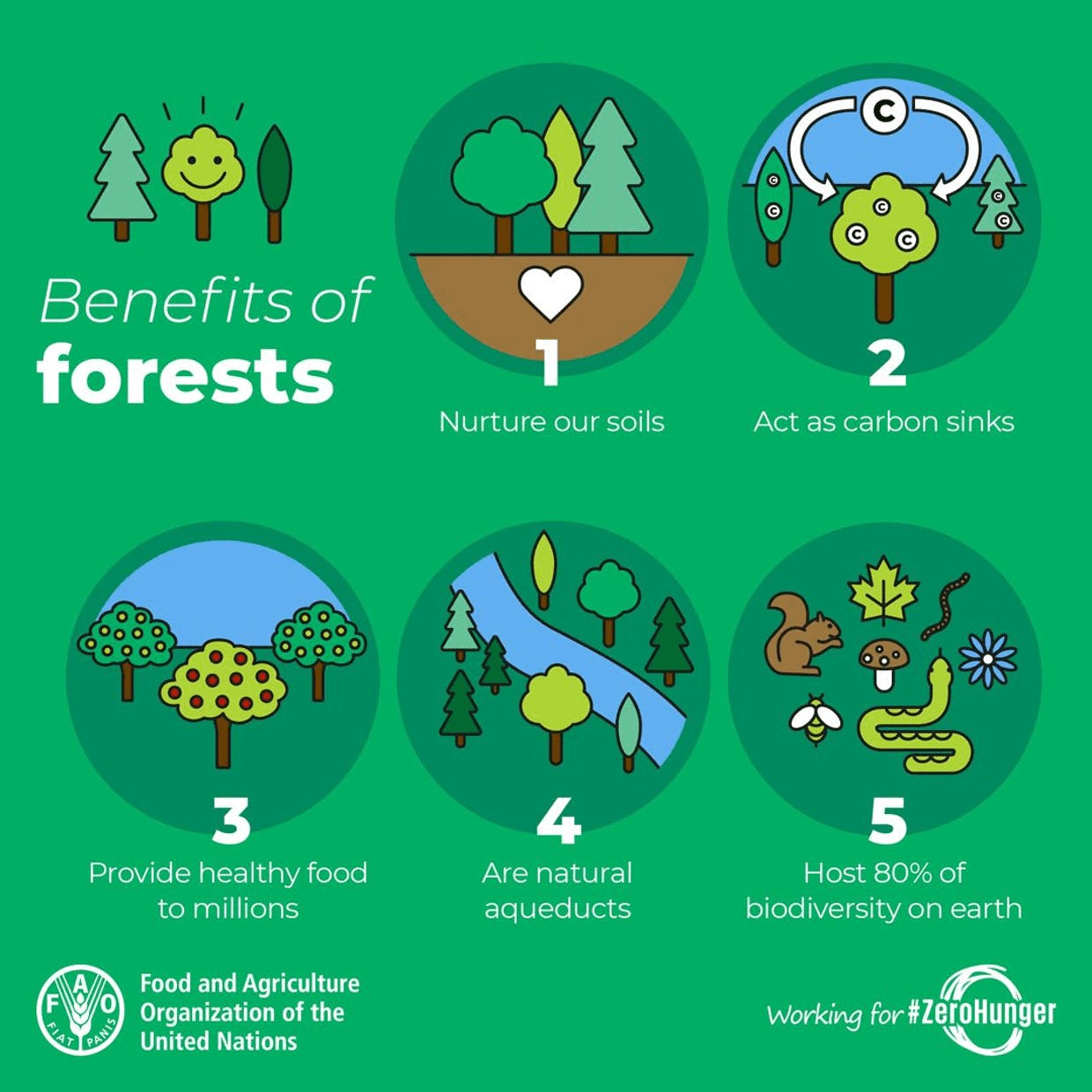 Trees & forests are one of the greatest natural resources we have – they do so much! This colourful infographic from FAO tells more: