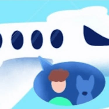 Pet travel 🚗✈️